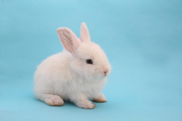 ウサギの画像 p1_38