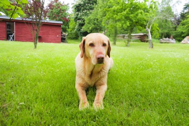 プーチンの飼い犬